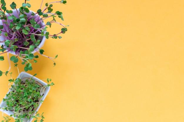Kress microgreen, pousses de radis rose sur jaune, plat poser, vue de dessus, fond Photo Premium