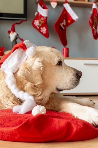 Labrador à La Maison Portant Un Bonnet De Noel Photo gratuit