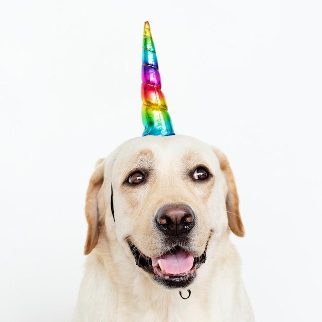 Labrador retriever mignon avec un chapeau de licorne Photo gratuit