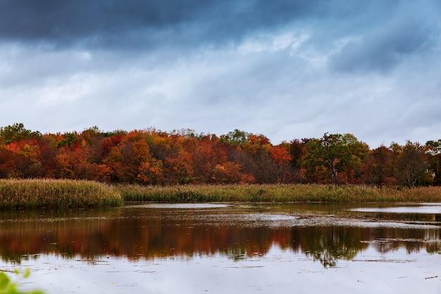 Lac de la forêt avec de l'eau claire et froide. Photo Premium