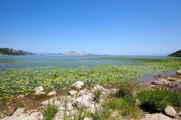 Le Lac (monténégro) - Lac Skadar Situé Au Monténégro En été De L'année Photo Premium