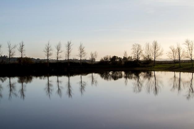 Lac Tranquille Avec Des Arbres Nus Sans Feuilles Photo Premium