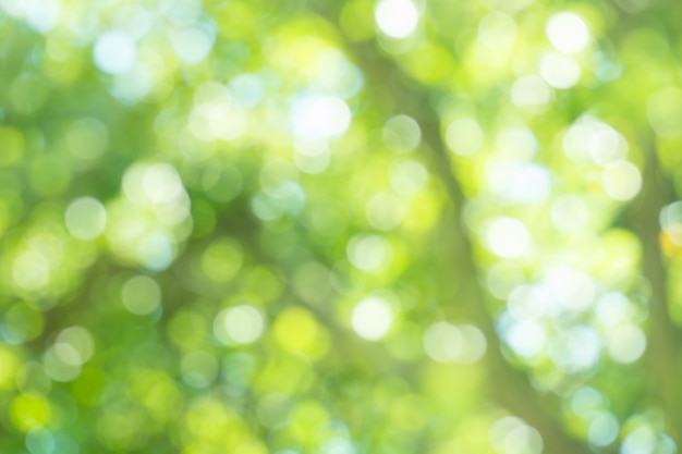 Laisse le bokeh pour le fond de la nature Photo Premium