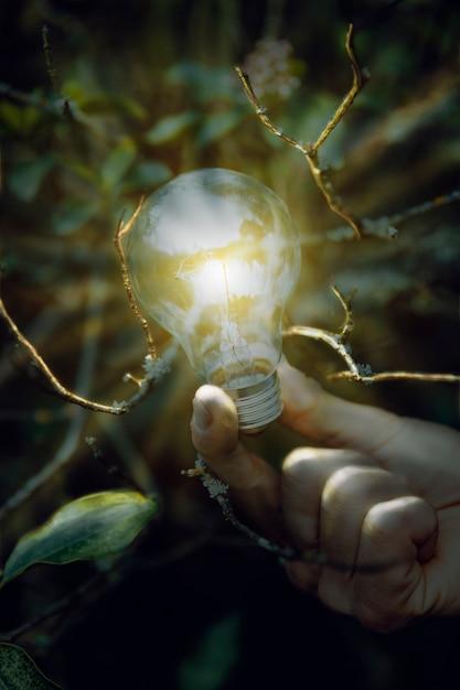 Lampe allumée à la main sur les branches de l'arbre Photo gratuit