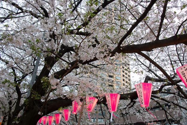 Lanterne au festival de sakura Photo Premium
