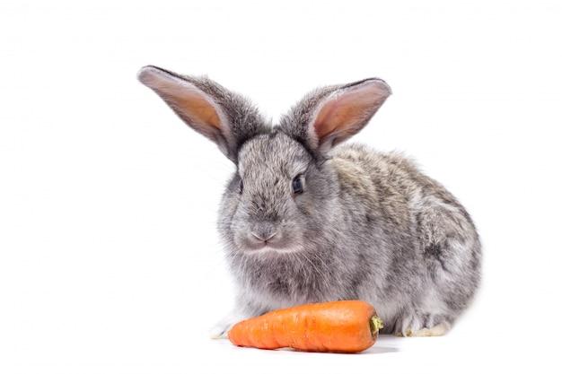 Lapin gris isoler avec des carottes, lapin décoratif Photo Premium
