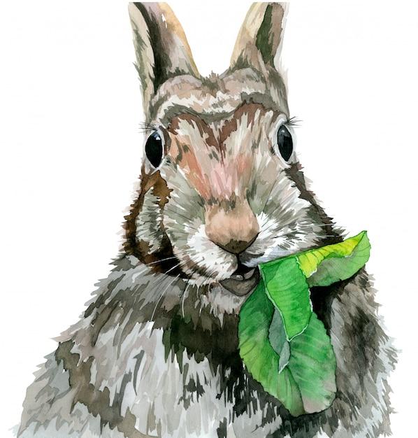 Lapin mangeant une feuille et regardant droit. illustration aquarelle Photo Premium