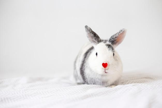Lapin avec ornement coeur rouge sur le nez Photo gratuit
