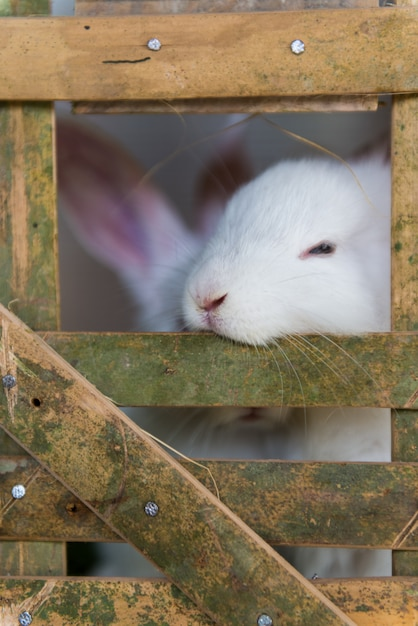 Lapins Blancs Mignons En Cage Photo Premium