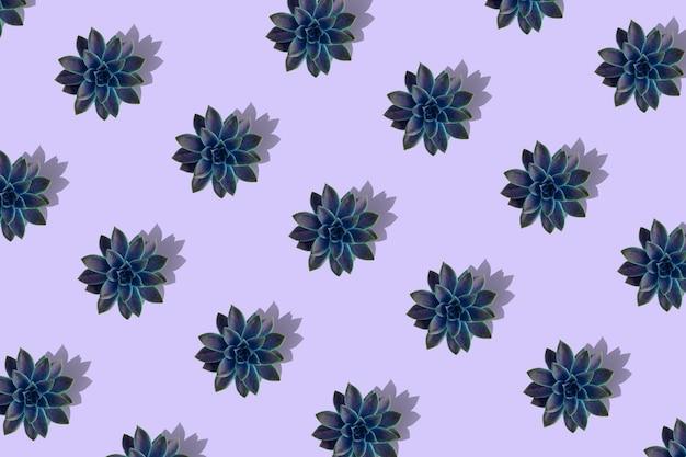 Lay plat de beau modèle de plantes succulentes vertes isolées sur violet, vue de dessus. Photo Premium