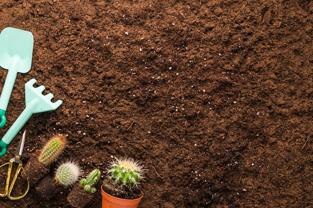 Lay plat de cactus et outils de jardinage avec fond Photo gratuit