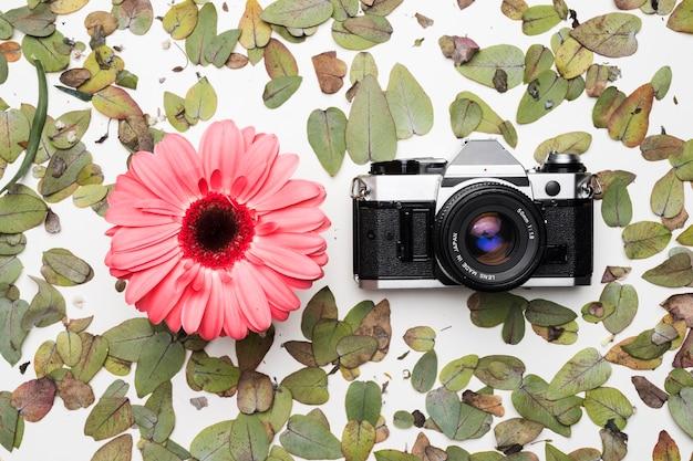 Lay plat de la caméra sur les feuilles Photo gratuit