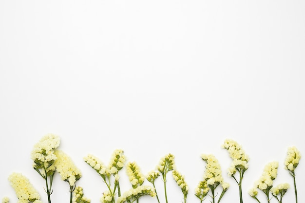 Lay plat de fleurs sauvages avec fond Photo gratuit