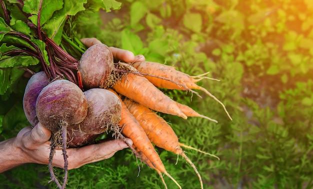 Légumes bio maison entre les mains des hommes. Photo Premium