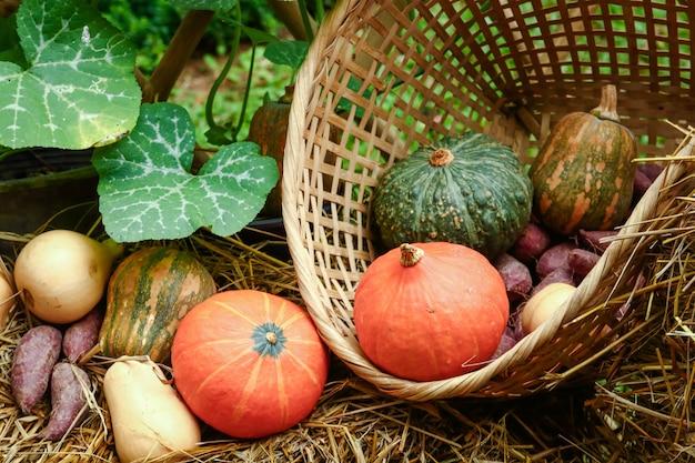 Les légumes biologiques cultivés par les agriculteurs comprennent les melons, les citrouilles et les patates douces. Photo Premium