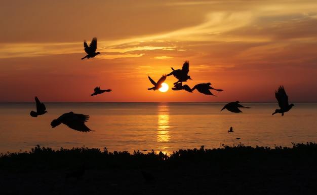 Lever du soleil sur la plage avec des oiseaux, samila beach songkhla, thaïlande Photo Premium