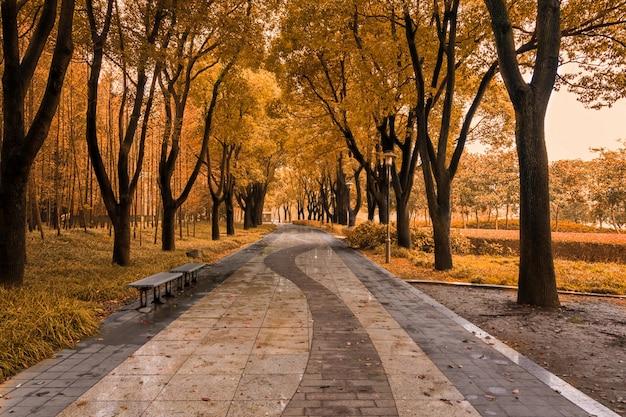 Lever De Soleil Dans La Forêt D'automne Photo gratuit