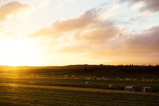 Lever de soleil dans le village Photo gratuit