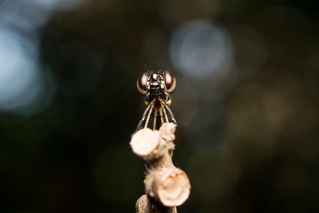 Libellule sur une branche d'arbre Photo gratuit