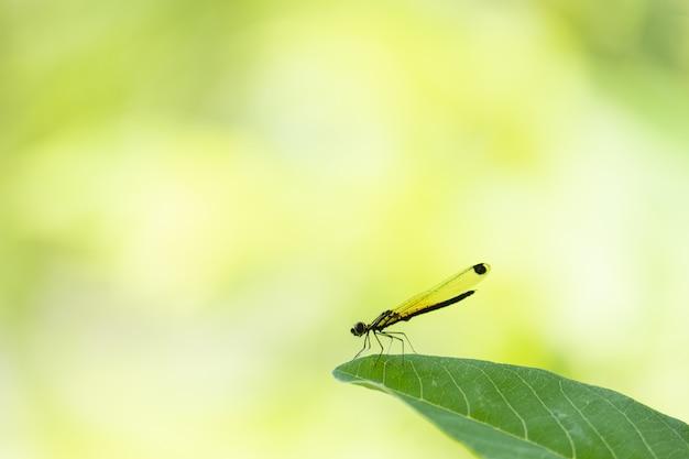 Libellule tenir sur une feuille verte Photo Premium