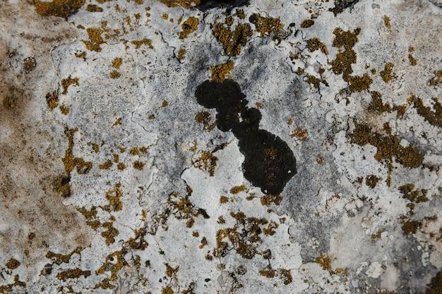 Lichen et mousse sur le vieux rocher Photo gratuit