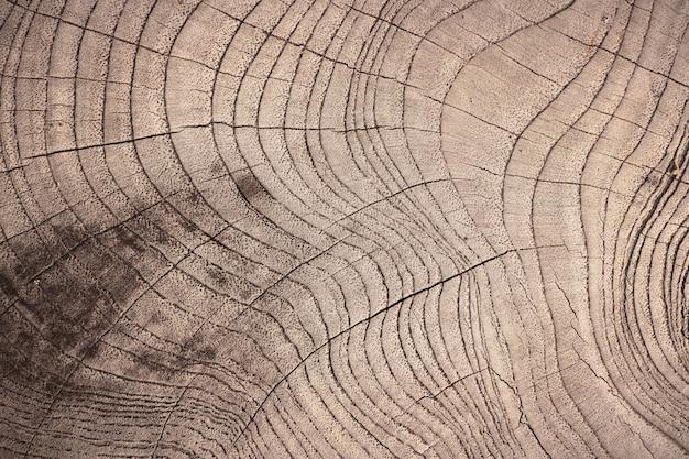 Ligne de bois sur le fond Photo Premium