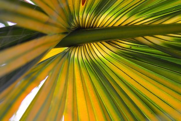 La ligne et les fibres sur fond de feuilles de palmier à sucre Photo Premium