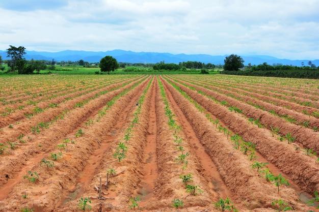 Lignes de sol faites par des tracteurs a ciel bleu et montagne Photo Premium