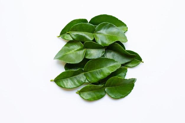 Lime kaffir bergamote laisse ingrédient frais aux herbes isolé sur fond blanc. Photo Premium