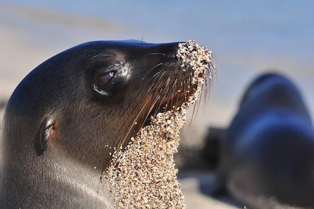 Lion de mer sur la plage Photo Premium