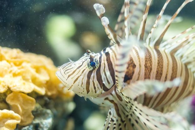 Lionfish ligne blanche Photo Premium