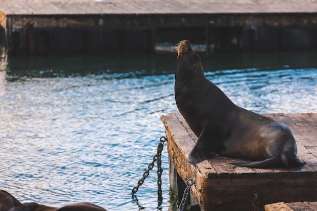 Lions De Mer à Pier 39, San Francisco, état De Californie Photo Premium