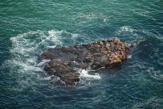 Lions de mer à point reyes, californie, états-unis Photo Premium
