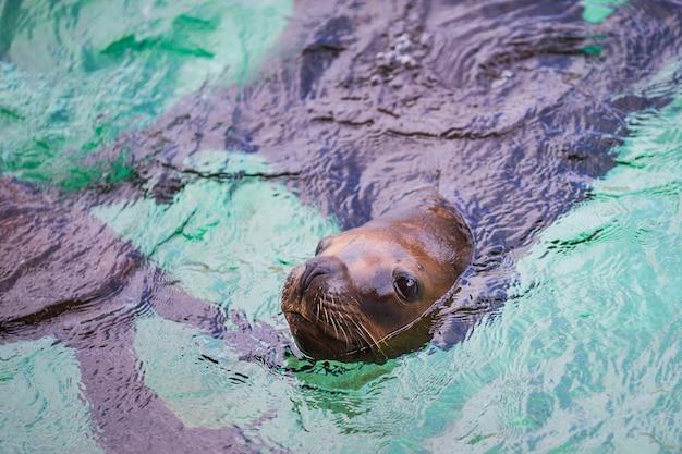 Lions de mer Photo gratuit