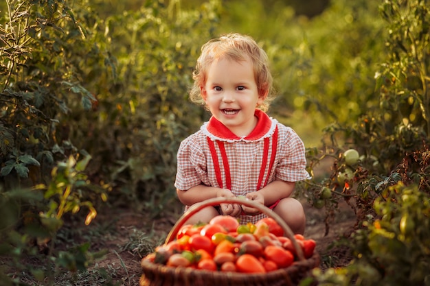 Litlle enfant (fille) prendre le légume (tomates) par une journée ensoleillée dans un jardin Photo Premium
