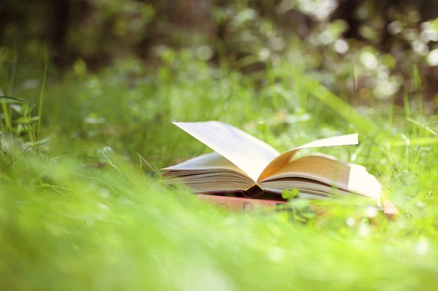 Livre Ouvert En Plein Air. La Connaissance, C'est Le Pouvoir. Réservez Dans Une Forêt. Réservez Sur Une Souche Photo Premium