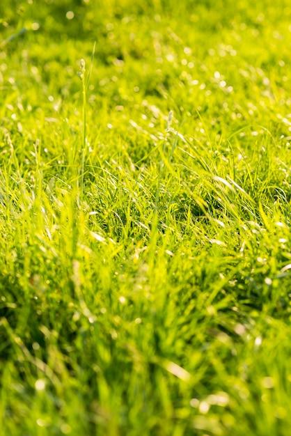 Longue herbe verte en été Photo gratuit