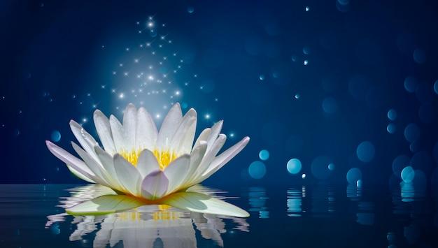 Lotus blanc lumière violet lumière flottante scintille Photo Premium