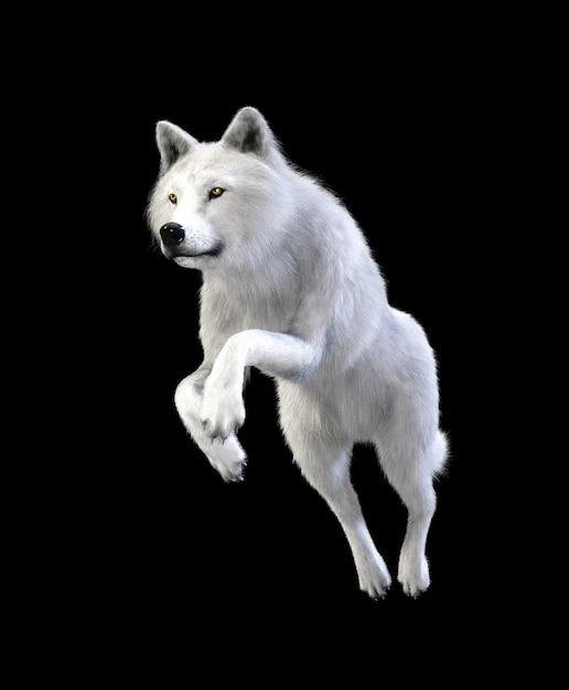 Loup blanc isoler sur fond sombre avec un tracé de détourage, loup arctique Photo Premium
