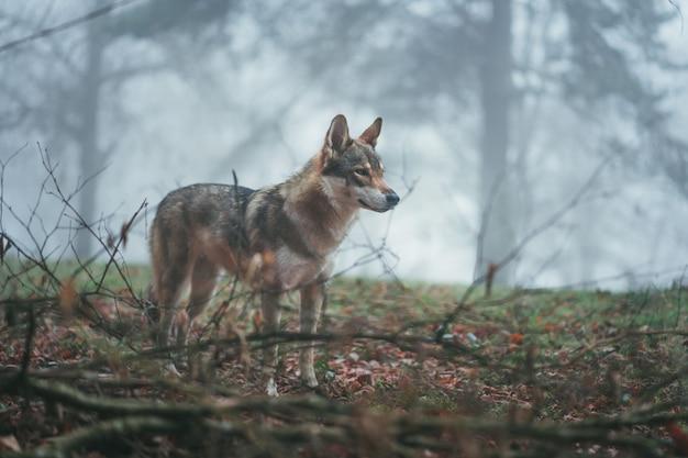 Un Loup Brun Et Blanc Avec Un Regard Féroce Au Milieu Des Feuilles Et Des Branches D'arbres Photo gratuit