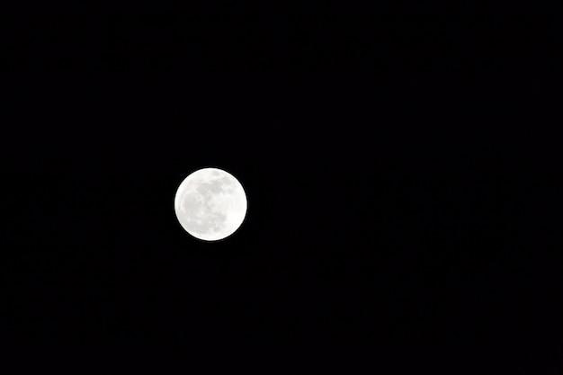 Loup nuit de lune blanc jolie Photo gratuit