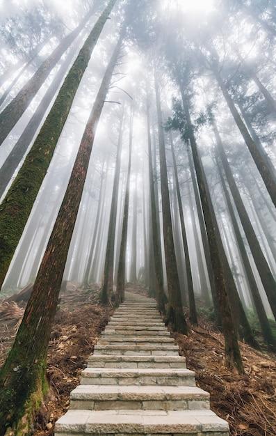 Lumière directe du soleil à travers les arbres avec du brouillard dans la forêt avec un escalier en pierre à alishan. Photo Premium