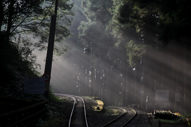 Lumière Du Soleil Dans La Forêt Sur Le Chemin De Fer à La Ligne Alishan, Taiwan Photo Premium