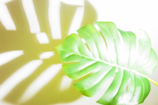 Lumière du soleil sur la feuille de monstera verte avec ombre sur fond blanc Photo gratuit
