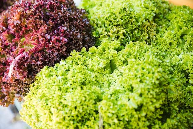 Lumière du soleil sur le kale frais vert et rouge Photo gratuit