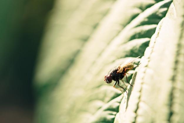 La lumière du soleil tombe sur une mouche qui repose sur une feuille verte. Photo Premium