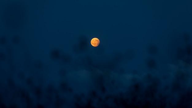 Lune Photo Premium