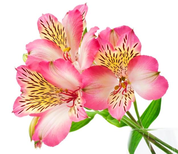 Lys Roses Photo Premium