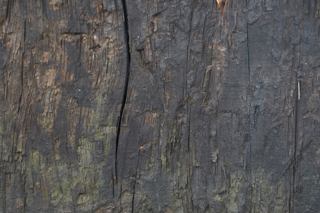 Macro bois tree texture brute Photo gratuit