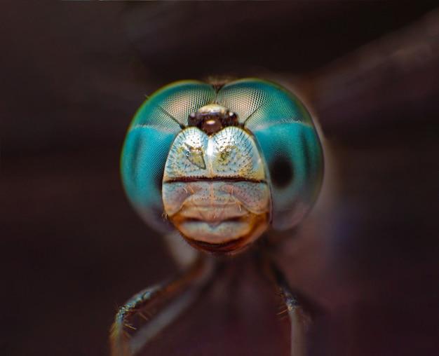 Macro extrême oeil de tir de libellule bleue dans la nature. Photo Premium